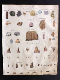 Goldsmith & Shaw 1817 Hand Col Print. Entraneous Fossils, Fish Teeth, Corals